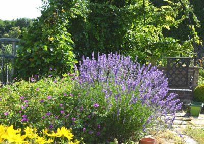Garten mit Bepflanzung - Malecek Gartengestaltung