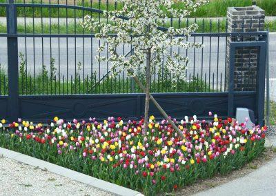 Tulpenbepflanzung - Malecek Gartengestaltung