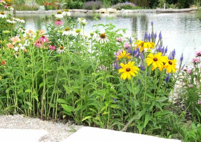 Teich mit Bepflanzung - Malecek Gartengestaltung